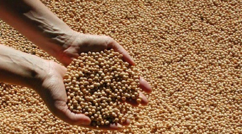 A semeadura da soja atingiu 97% da área estimada no Rio Grande do Sul