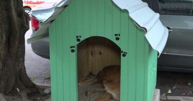 Prefeitura ameaça retirar casinhas de cachorros de rua na capital